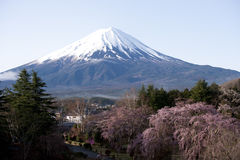 Mount Fuji. With cherry blossomed trees in foreground Stock Photography