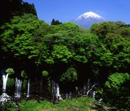 Mount Fuji. An Springtime view of Mount Fuji with a lush forest and beautiful waterfall in the foreground Royalty Free Stock Photos