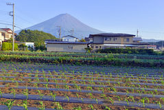 Mount Fuji as viewed from rural town in Japan Royalty Free Stock Image