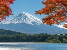 Mount Fuji in Autumn Color, Japan. Colorful Autumn in Mount Fuji, Japan - Lake Kawaguchiko is one of the best places in Japan to enjoy Mount Fuji scenery of Royalty Free Stock Photo