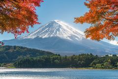 Mount Fuji in Autumn Color, Japan. Colorful Autumn in Mount Fuji, Japan - Lake Kawaguchiko is one of the best places in Japan to enjoy Mount Fuji scenery of Stock Photo
