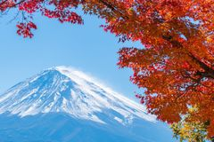 Mount Fuji in Autumn Color, Japan. Colorful Autumn in Mount Fuji, Japan - Lake Kawaguchiko is one of the best places in Japan to enjoy Mount Fuji scenery of Stock Photos