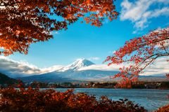 Mount Fuji in Autumn Color, Japan. Colorful Autumn in Mount Fuji, Japan - Lake Kawaguchiko is one of the best places in Japan to enjoy Mount Fuji scenery of royalty free stock image