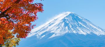 Mount Fuji in Autumn Color, Japan. Colorful Autumn in Mount Fuji, Japan. Selective focus at Mount Fuji with blurry autumn leaves frame royalty free stock photos