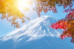 Mount Fuji in Autumn Color, Japan. Colorful Autumn in Mount Fuji, Japan. Selective focus at Mount Fuji with blurry autumn leaves frame Royalty Free Stock Image