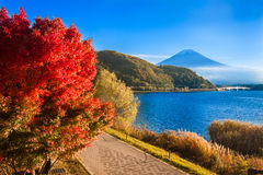 Mount Fuji. In autumn colors at lake Kawaguchiko Japan Royalty Free Stock Images