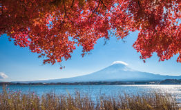 Mount Fuji and autumn maple leaves, Kawaguchiko lake, Japan Stock Images