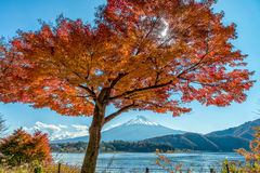Mount Fuji in autumn season Royalty Free Stock Images