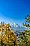 Mount Fuji with blue sky Royalty Free Stock Photography