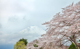 Mount Fuji and cherry blossoms in spring, Japan Royalty Free Stock Photo