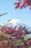 Mount Fuji with Clear sky at Kawakuchigo lake. Long exposure. Stable Lake Kawakuchigo.Red maple in front of it Royalty Free Stock Photography
