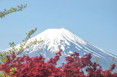 Mount Fuji with Clear sky at Kawakuchigo lake with red maple Stock Photos