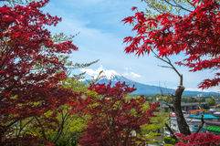 Mount Fuji with Clear sky at Kawakuchigo lake with red maple Royalty Free Stock Photo