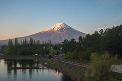Mount Fuji with Clear sky at Kawakuchigo lake. In sunrise. There are trees in front ground Royalty Free Stock Photo