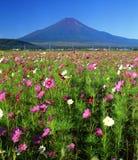 Mount Fuji CXIII. A beautiful Cosmos field near Mount Fuji Stock Photo
