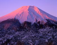Mount Fuji CXV Stock Photos