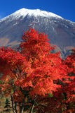 Mount Fuji in Fall Stock Images