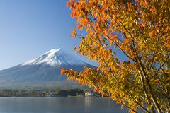 Mount Fuji in Fall IX Royalty Free Stock Image