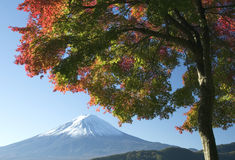 Mount Fuji in Fall V Royalty Free Stock Photos