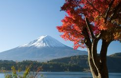 Mount Fuji in Fall VII. Lakeside view of Mount Fuji with beautiful Fall leaves in foreground stock images