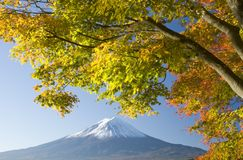 Mount Fuji in Fall X Royalty Free Stock Photos