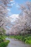 Mount Fuji från Oshino Hakkai med full blom för körsbärsröd blomning Arkivbild