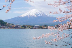Mount Fuji från sjön Kawaguchiko med den körsbärsröda blomningen Arkivbild