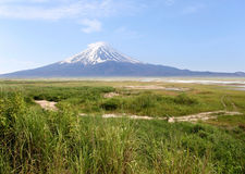 Mount Fuji and green meadows. Stock Photography