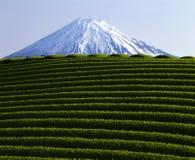Mount Fuji IX. Green tea fields in front of Mt. Fuji Stock Photos