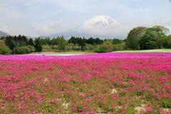 Mount Fuji Japan Arkivfoton