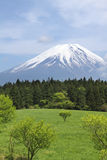 Mount Fuji, Japan. Mount Fuji in early summer, Japan royalty free stock images