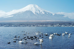 Mount Fuji in Japan Stock Images