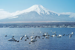 Mount Fuji in Japan Royalty Free Stock Image