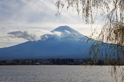 MOUNT FUJI, JAPAN. Snow capped mount Fuji as viewed from the banks of the Kawaguchi Lake in the evening time. A willow tree frames the image stock photos