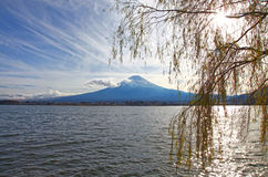 MOUNT FUJI, JAPAN. Snow capped mount Fuji as viewed from the banks of the Kawaguchi Lake in the evening time. A willow tree frames the image royalty free stock images