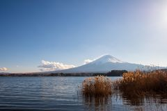 Mount Fuji with lake in the foreground in a clear day. The Mount Fuji with lake in the foreground in a clear day stock photos