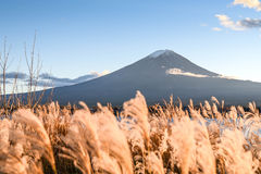 Mount Fuji at Lake Kawaguchi, Japan. Beautiful view of Mount Fuji and field at Lake Kawaguchi in autumn, This mountain is an famous place of Japan royalty free stock photography