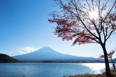 Mount Fuji. From lake Kawaguchi with maple trees on the lakeside royalty free stock photos