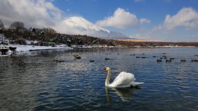 Mount Fuji and lake with swans and ducks Royalty Free Stock Images
