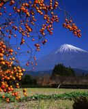 Mount Fuji LII Royalty Free Stock Photo