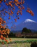Mount Fuji LII. Delicious looking Japanese Kaki near Mount Fuji Royalty Free Stock Photo