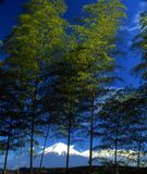 Mount Fuji LXXXIX Stock Photo