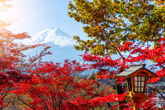 Mount Fuji and maple tree. Asian young woman stock image