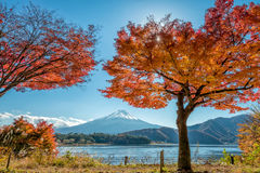 Mount Fuji with maple tree. Beautiful Maple Momiji leaves and tree with mount Fuji at lake Kawaguchiko, Japan stock images