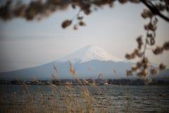 mount Fuji met Sakura Foreground bij Kawakuchiko-Meer Stock Foto