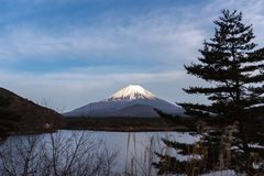 Mount Fuji or Mt. Fuji, the World Heritage, view in Lake Shoji ( Shojiko ). Fuji Five Lake region. Minamitsuru District, Yamanashi prefecture, Japan. Landscape royalty free stock photos