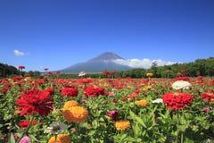 Mount Fuji och Zinnia Arkivbild
