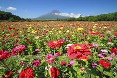 Mount Fuji och Zinnia Royaltyfria Bilder