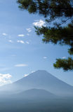 Mount Fuji with pine tree Stock Photo