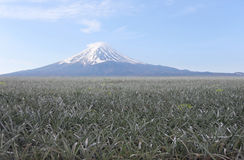 Mount Fuji and pineapple plantations. Royalty Free Stock Photos